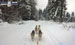 S Kasey, Ashley, Amy, Alaskou, Terry a Tessie na prvních zimních závodech se spřežením v Janovičkách