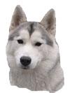 AMY Siberian Paws